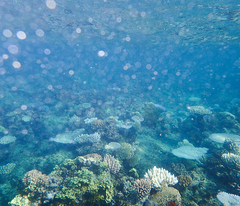 Coral Reefs – the lungs of the planet