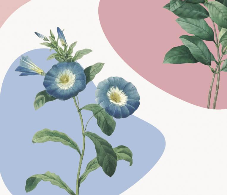 Sag's durch die Blume! Frühlingsblüher und deren psychologische Wirkung