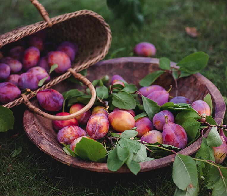 Garten & Pflaumen – Vom Überfluss zur Lieblingszutat