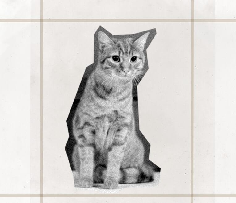 An Oscar for animals