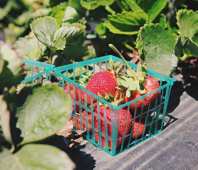 Farm shops – regional, organic produce