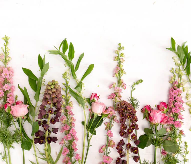 sisterMAG Blumen Guide »Rosa und Blau« mit Botanic Art