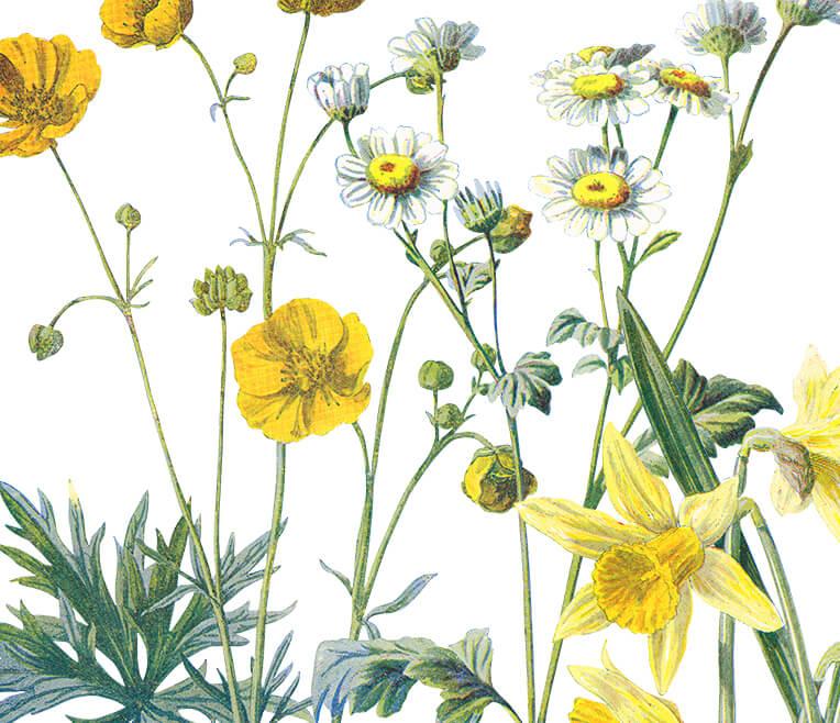 Dialog im Grünen – Die geheimnisvolle Sprache der Pflanzen