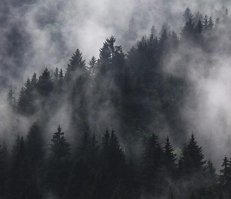 Wandern im Nebel: Interview mit Raus aus Berlin