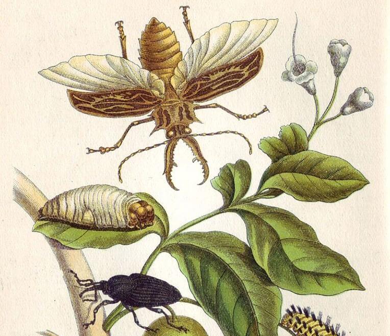 Jungle Queens – Abenteurerinnen und Forscherinnen in der Geschichte