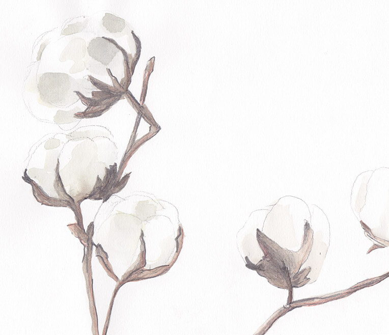 Infofeature Cotton