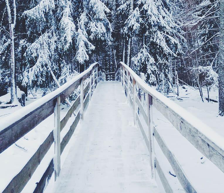 Winterfreuden und Winterflucht